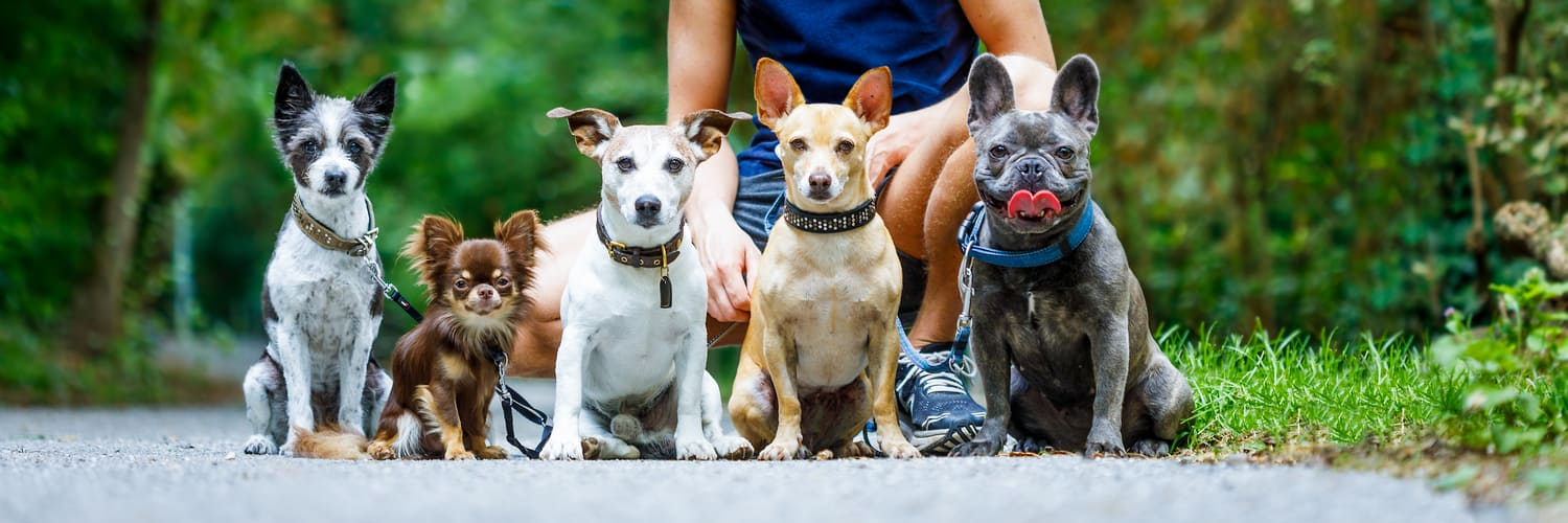 Group Obedience Classes