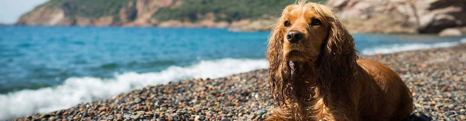 WoofBeach sands dog care