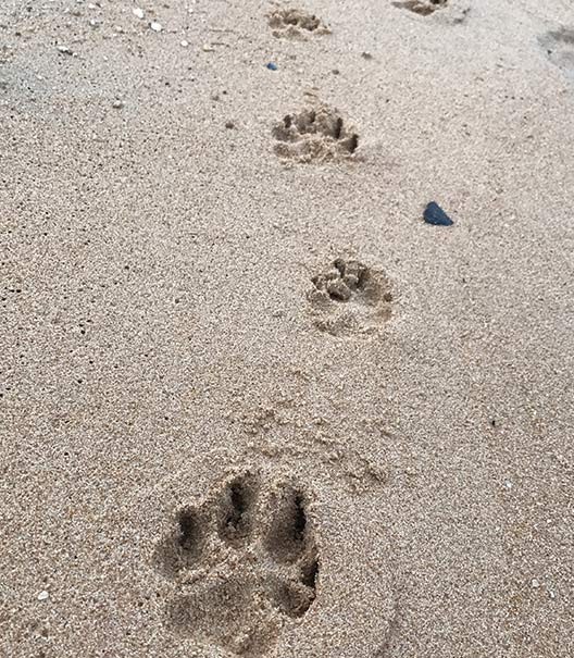 WoofBeach sands dog paw pad south elgin, il service