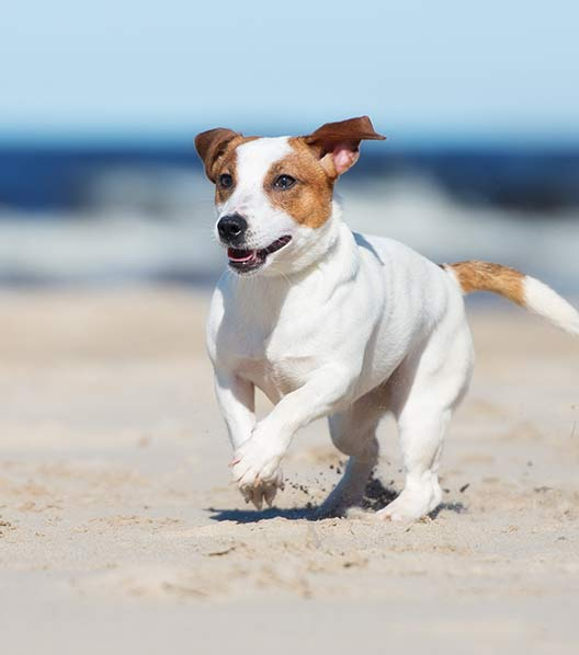 WoofBeach sands south elgin, il dog care